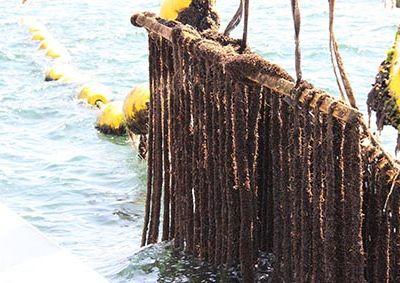 Captage des moules de filières